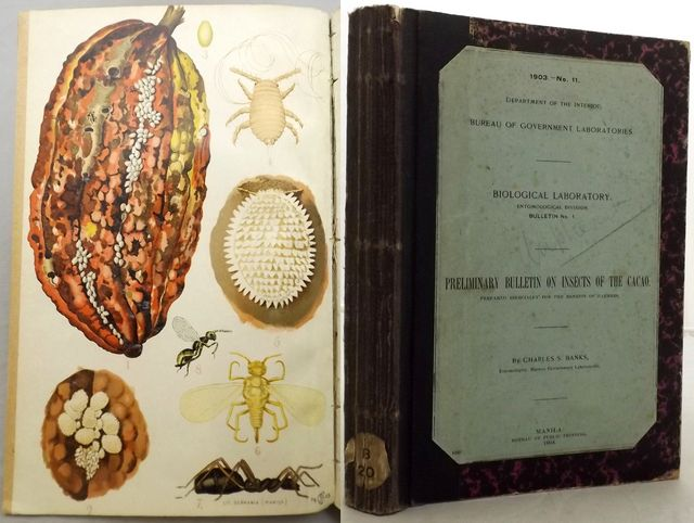 PRELIMINARY BULLETIN ON INSECTS OF THE CACAO.