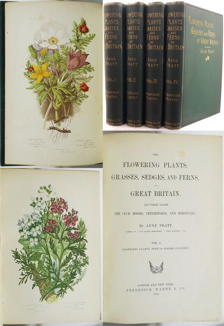 THE FLOWERING PLANTS, GRASSES, SEDGES, AND FERNS, OF GREAT BRITAIN,